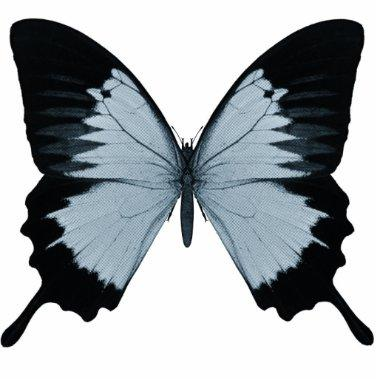 Big Blue & Black Butterfly Statuette