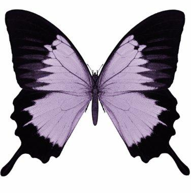Big Purple & Black Butterfly Cutout
