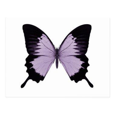 Big Purple & Black Butterfly Post