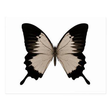 Big Sepia Orange & Black Butterfly Post