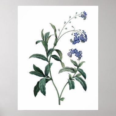 Botanical PREMIUM QUALITY print of forget-me-not