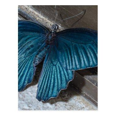 butterfly blue insect flying beautiful wings post