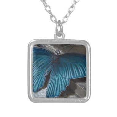 butterfly blue insect flying beautiful wings silver plated necklace