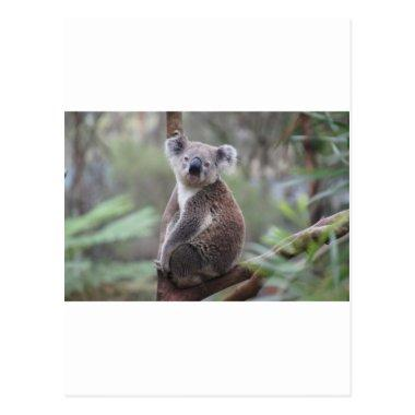 Koala Bear Safari Jungle Outback Congratulations PostInvitations