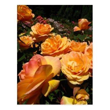 Orange Rose * Joy Post