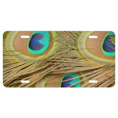 Peacock Feathers License Plate