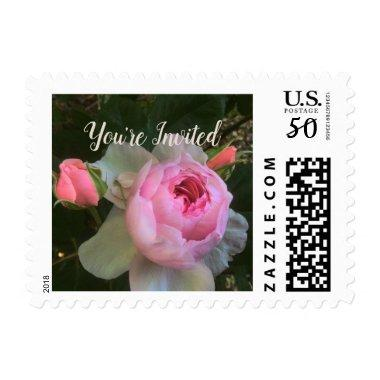 Pink Cabbage Rose and Rosebuds Occasion Postage