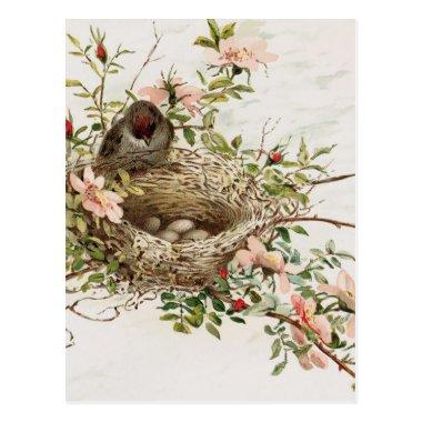 Vintage Bird in Nest Animal Print PostInvitations